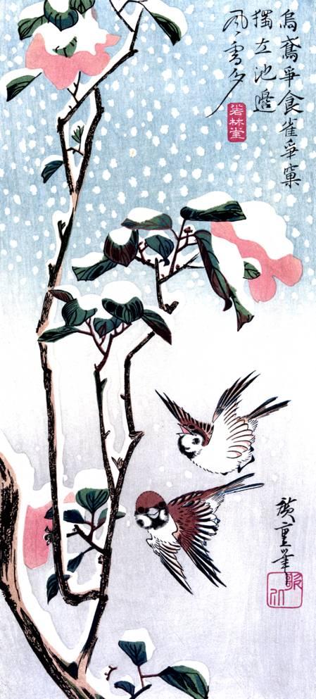 Воробьи над покрытой снегом камелией